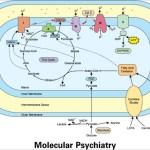 La disfunción mitocondrial en los Trastornos del Espectro Autista