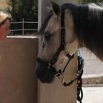 Las terapias asistidas con caballos – Un enfoque psicopedagógico