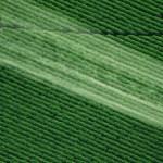 Nuevas evidencias sobre la asociación entre pesticidas y autismo
