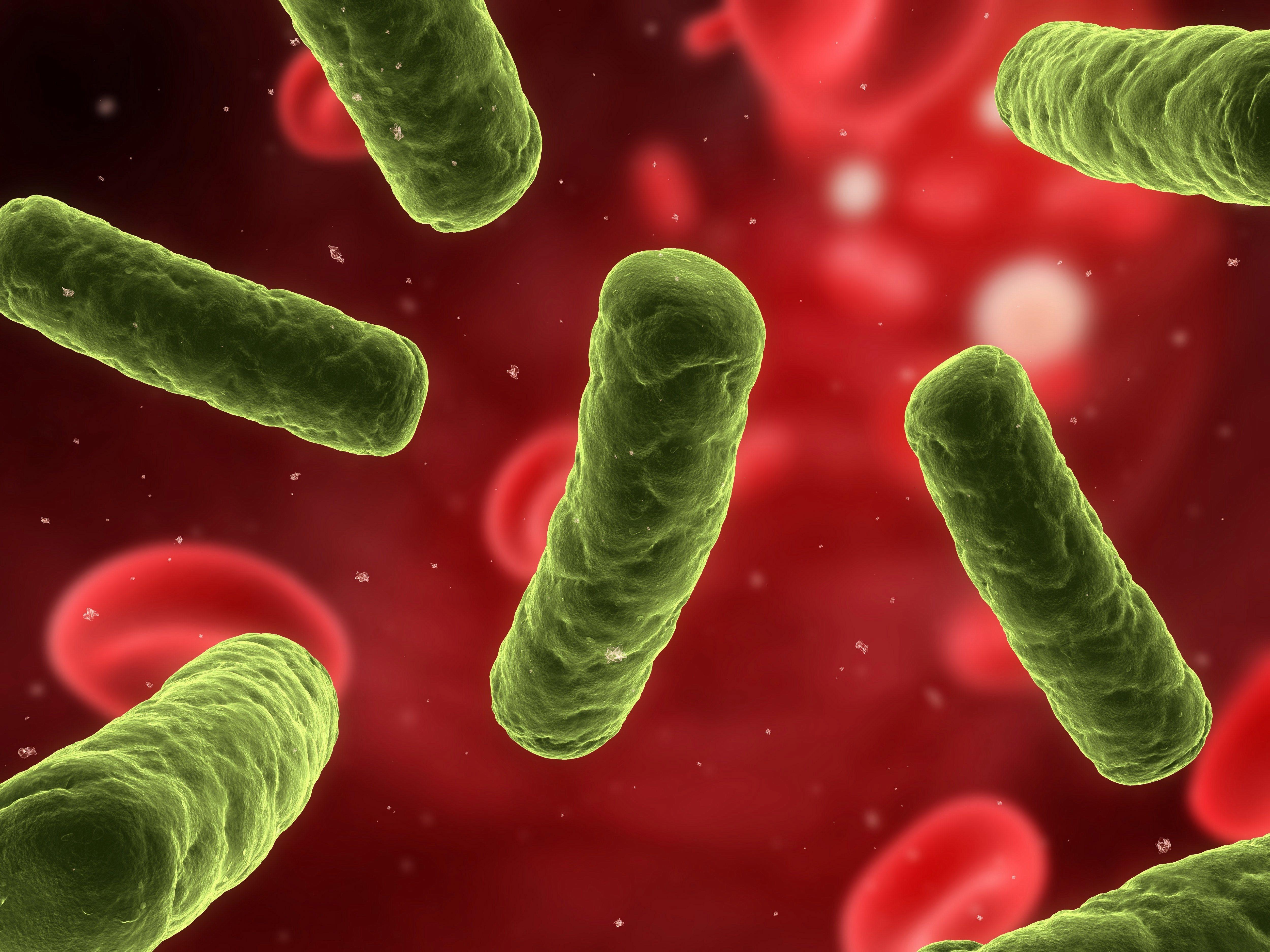 Infeccion intestinal bacteriana