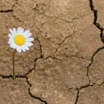 Autismo y el desarrollo de la resiliencia
