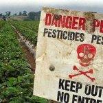 Ácido fólico, pesticidas y autismo