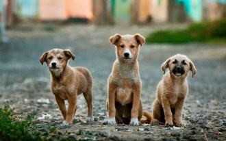 dogs-984015