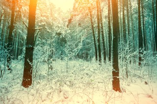 Winter snowy forest at sunset