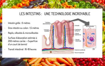 À la découverte de l'intestin : Le roi des organes !