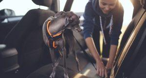 cestovani-se psem-jak-na-to