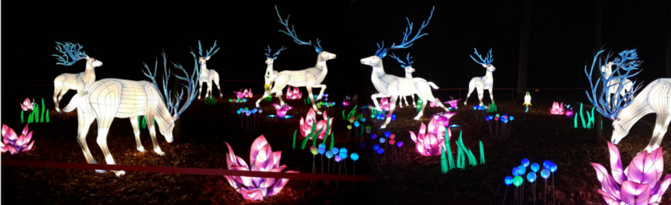 Gaismas festivāls Lielās Ķīnas laternas Lietuvā