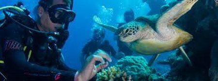 Ferier Cairns Australien
