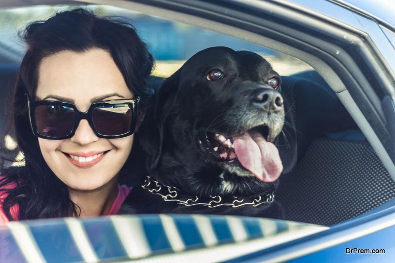 pet inside car