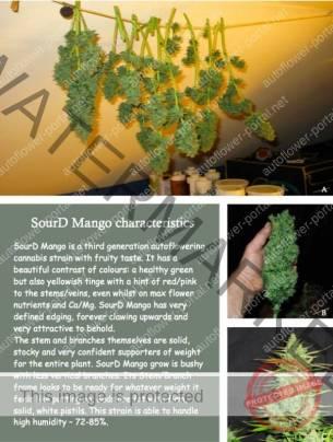 SourD Mango page