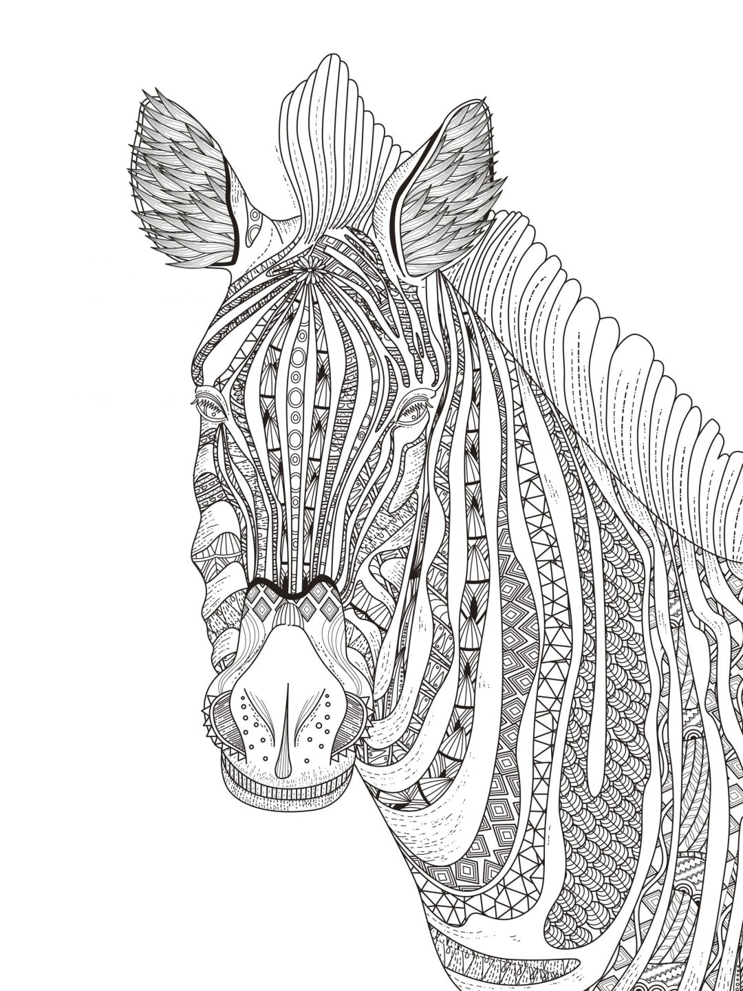 zebra 7 scaled - Cognitive Exercises for AE Patients