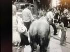 l'éléphant du cirque Pinder en balade dans Nice (archives INA)