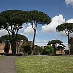 Rome et ses pins parasols