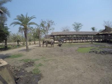 Elephants World.