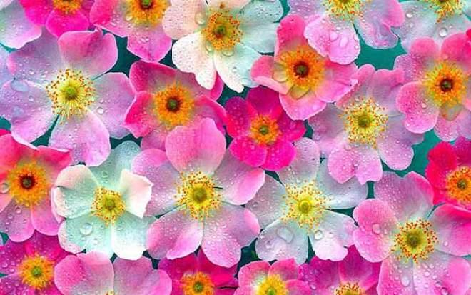atacado de flores