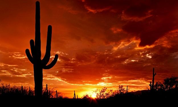 © Saguaro Pictures