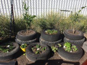 Environmental, Think Green, Veggie Garden Initiative