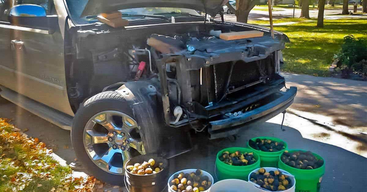 Белки устроили склад грецких орехов под капотом пикапа Chevrolet - Motor