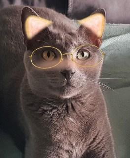 Лучшие кошачьи мемы онлайн
