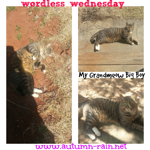 Wordless Wed April 23 2014- My Grandmeow Big Boy @TheBESOCIETY