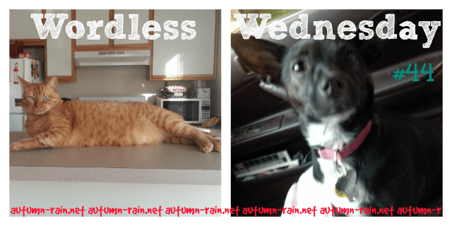 BE Society Wordless Wed #44 (Linky will post soon!)
