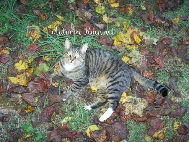 @thebesociety Fallish October Blog Challenge 4/31- Leaves