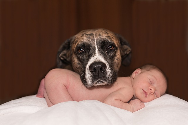 Reducing The Friction With The Latest Addition: Introducing Your Pet To Your New Baby