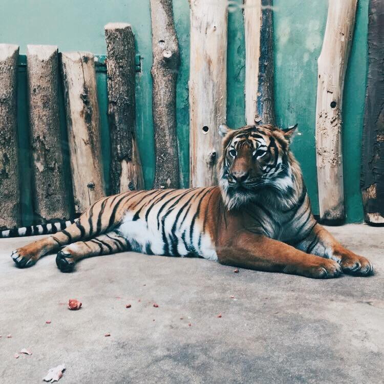 Things to do in Prague: Prague Zoo