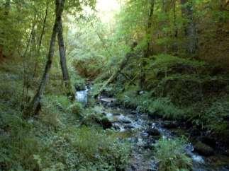 randonnée à cheval pleine nature Les Paddocks Vollore Montagne Puy de Dôme Auvergne