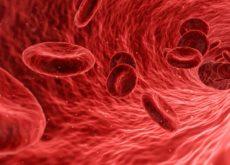 Le système circulatoire