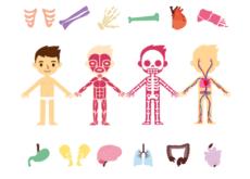 L'organisation du corps humain