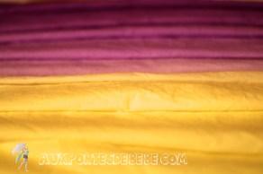 bicolore-jaune-violet