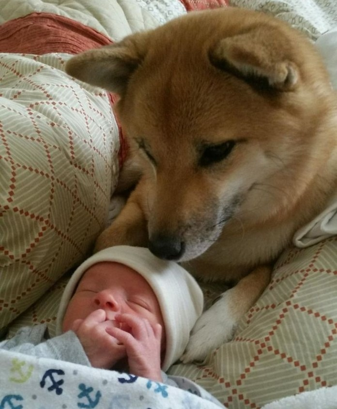 cute dog with a cute baby
