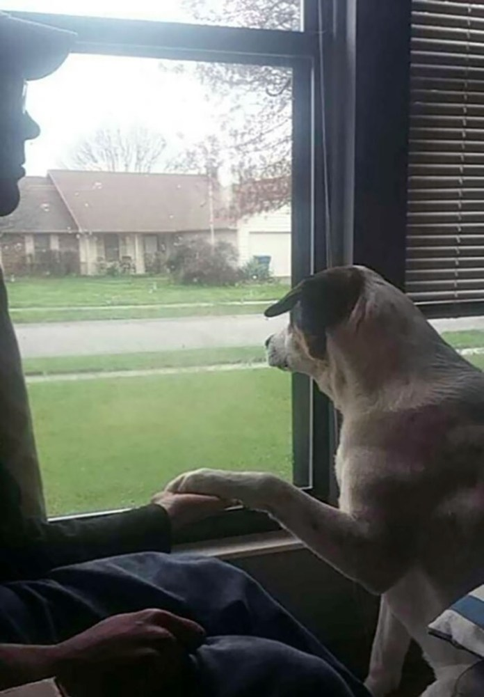 dog and owner holding hands