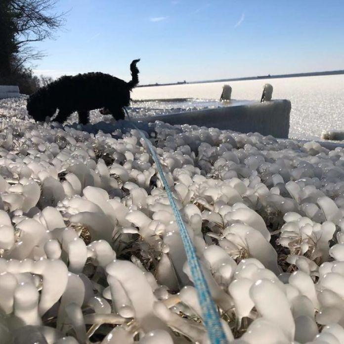 One Cold Rowdy Dog On The Bulkhead