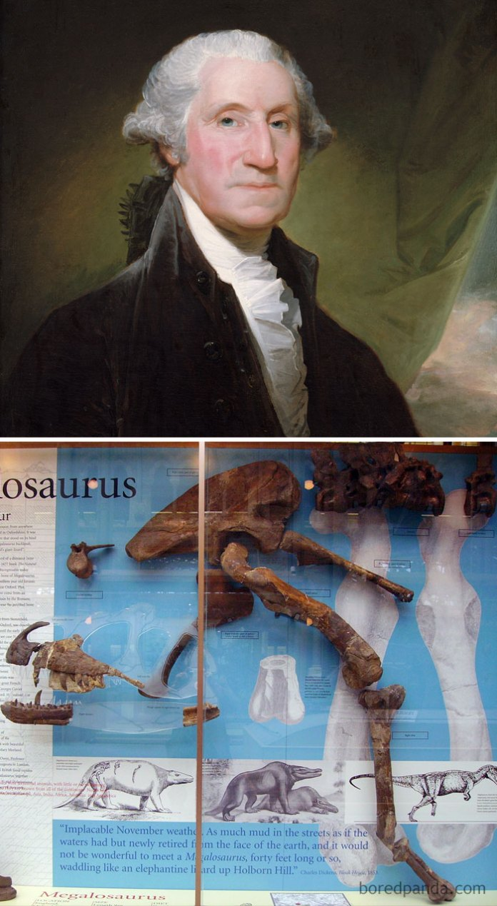 George Washington Died In 1799. The First Dinosaur Fossil Was Discovered In 1824. George Washington Never Knew Dinosaurs Existed