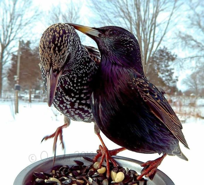 caring and loving birds