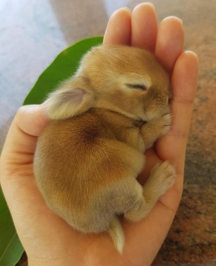 little bunny sleeping on palm