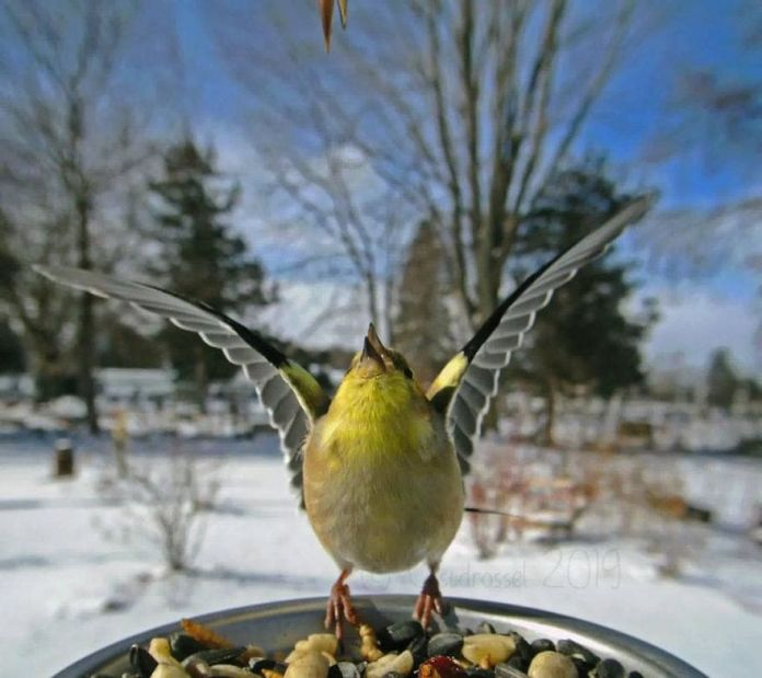 bird worshipping the sun