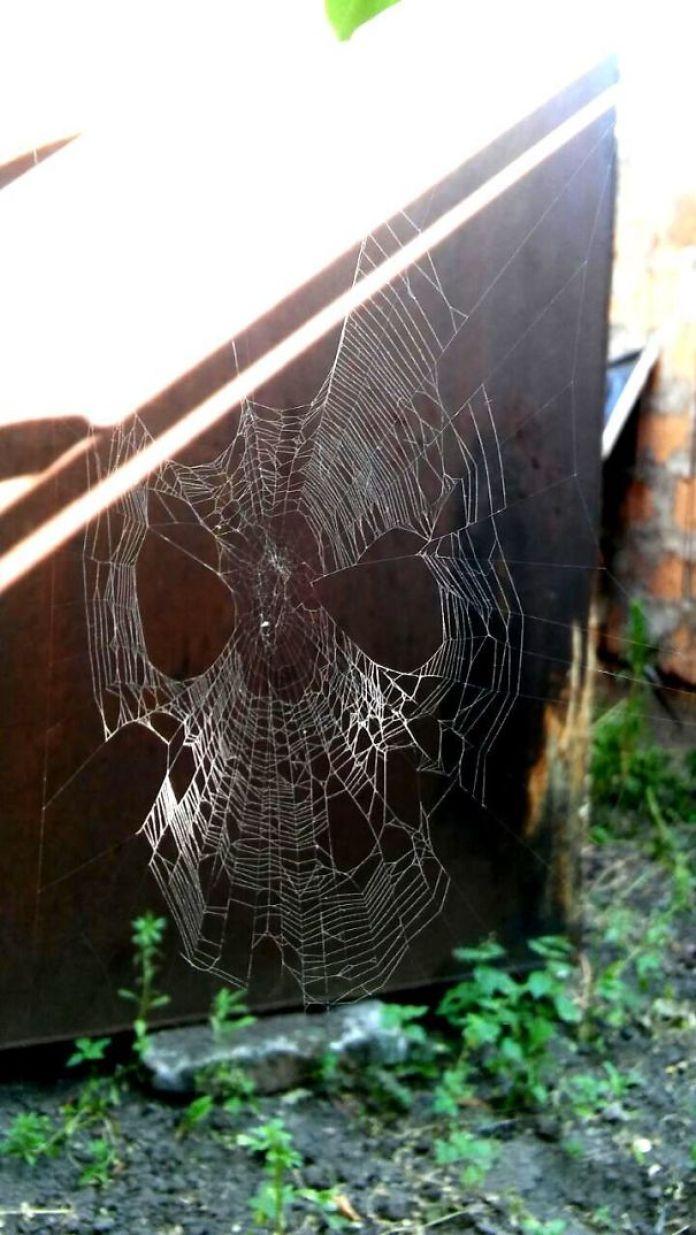cob webs