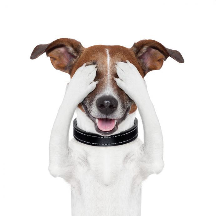 dog covered eyes