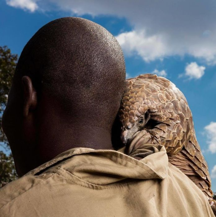 world's best pangolin caregivers at the Tikki Hywood