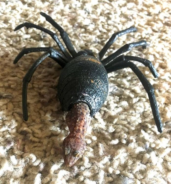 Friggin Gecko Hiding In My Son's Toy Spider