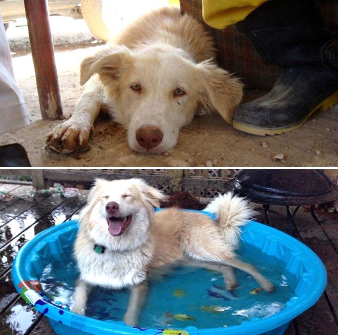 white dog in kiddie pool
