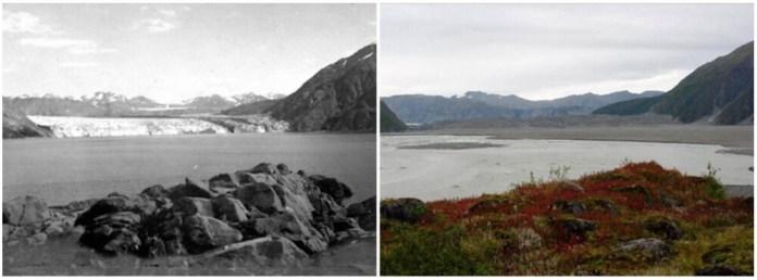 Carrol Glacier, Alaska. August 1906- September 2003