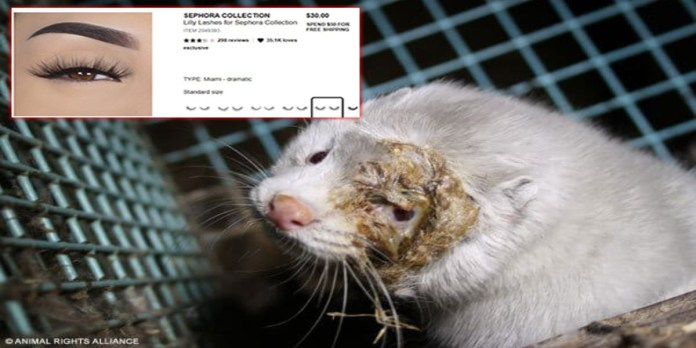Animal Rights Alliance