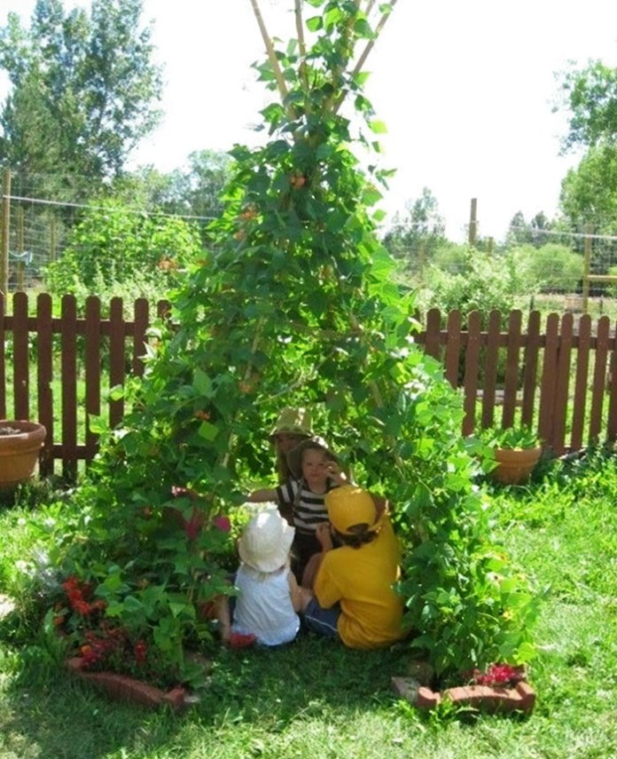 Garden bean tents