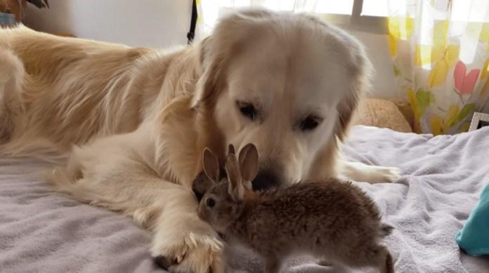 Bailey and the bunnies
