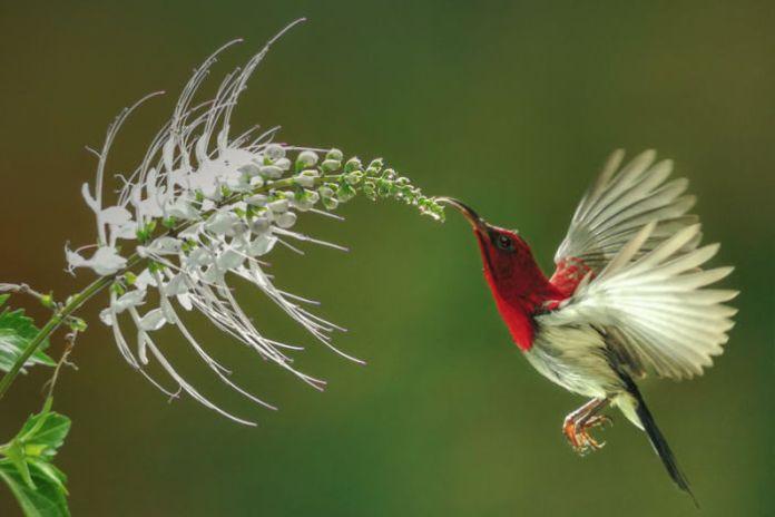 A bird is sucking nectar from a flower