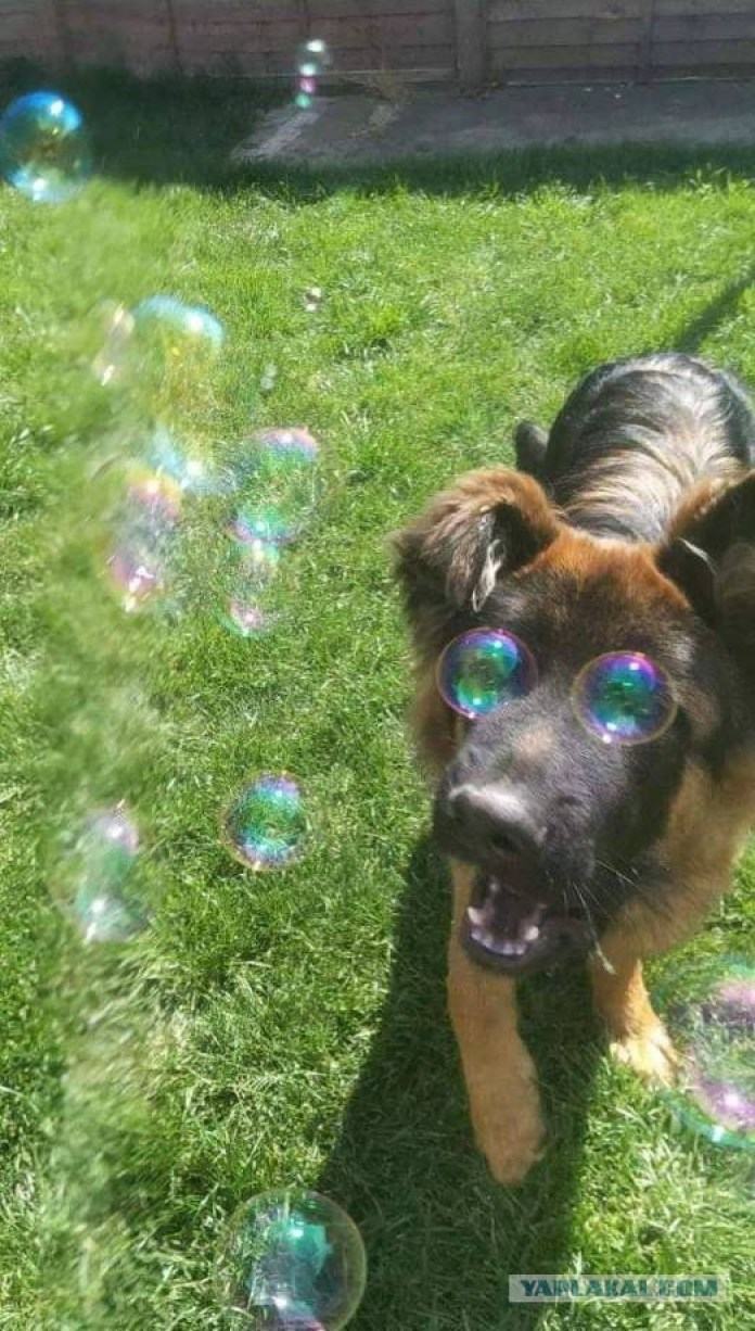 Have You Ever Seen Eye Bubbles Before?
